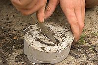 Kinder gießen Tierspur aus Gips, Junge reinigt Gipsabdruck vom Trittsiegel, der Fußspur von einem Reh mit einem Taschenmesser von Erdresten