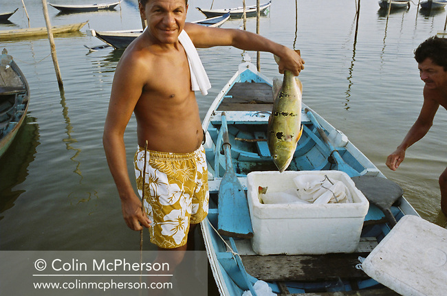 A fisherman holds up a freshly caught peacock bass (tucunare), captured in his net in the waters of the Tapajos river. This was the most popular choice of fish for local dishes but catch numbers declined due to a severe drought in the Amazon and the effects of deforestation on river habitats. The rainforest was cleared by illegal logging and burning for cattle ranching and growing soy beans for export.