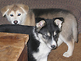 Buffy & Brutus - The Puppy Years