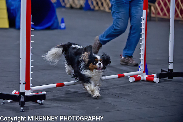 CPE Agility Trial held March 23 - 24 2013 at Boomtowne Canine Campus in Farmington NY