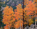 fall, color, Rocky Mountain National Park, Colorado, USA, aspen leaves