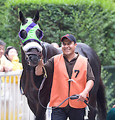 Castleton Lyons Farm's Gio Ponti won his first race of 2010 on Saturday, taking the $600,000 Grade 1 Man O' War Stakes at Belmont Park. Owned by Castleton Lyons Farm and trained by Christophe Clement, The 2009 dual-Eclipse winner and jockey Ramon Dominguez got up in the final strides to edge 53-1 shot Mission Approved by a nose.