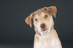 Diageo New Dogs
