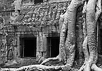 Ta Prohm Roots And Stone 02 - Silk-cotton tree roots on the NW side of Gopura III, Ta Prohm Temple, Angkor, Cambodia
