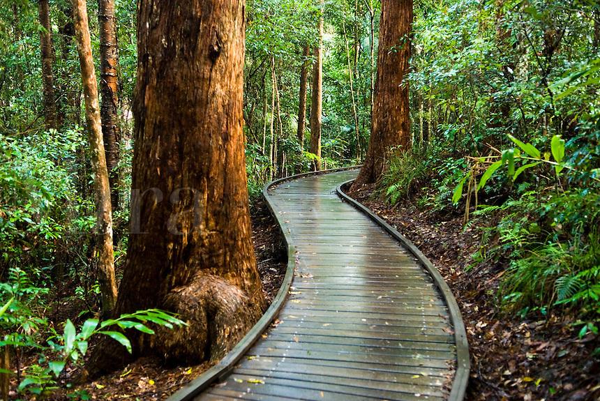 Forest walkway, Queensland, Australia