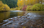 Idaho, North, Kinston, Coeur d'Alene National Forest. The Little North Fork of the Coeur d'Alene River lined with autumn color.