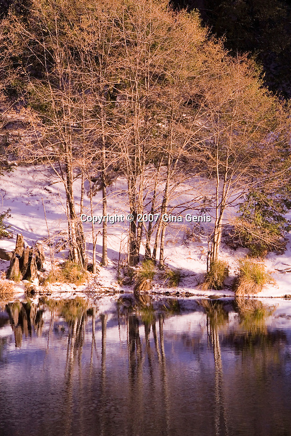 Winter snow and golden tree reflections in Lake Fulmor