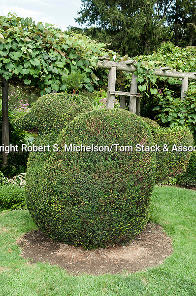 Swan topiary at Green Animals Topiary in Portsmouth, Rhode island.  This figure is made from California Privet.