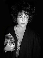 Elizabeth Taylor Undated<br /> Photo By Adam Scull/PHOTOlink.net