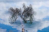 """""""DEAD TREE IN HEAVEN""""<br /> <br /> (1) 42 X 30 canvas print $3,000<br /> (1) 36 X 24 canvas print $2,400<br /> <br /> 17 x 12.5 signed paper print<br /> 1/50 $110.00<br /> <br /> <br /> <br /> <br /> <br /> <br /> Dead tree in a pool of clouds on the Bull River British Columbia"""
