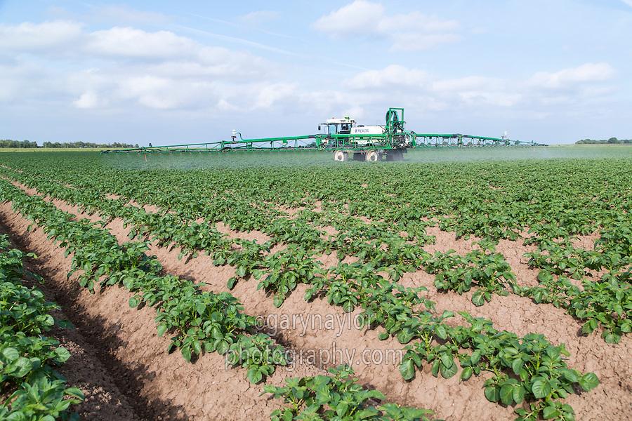Blight spraying potatoes - Lincolnshire, June