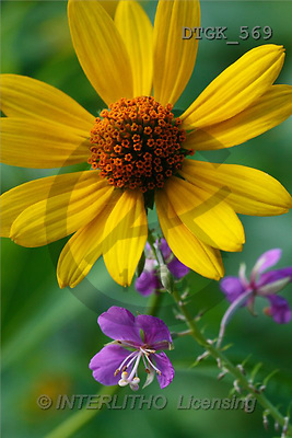 Gisela, FLOWERS, photos(DTGK569,#F#) Blumen, flores, retrato