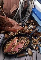 """Europe/France/Bretagne/29/Finistère/Brest : Poêlée de rougets au ragoût de coquillages sur un authentique coquillier - Recette de Philippe Corre chef du restaurant gastronomique """"Pointe Saint-Mathieu"""" à Plougonvelin"""