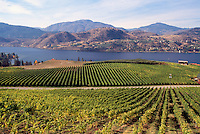 Vineyards at Skaha Lake near Okanagan Falls, South Okanagan Valley, BC, British Columbia, Canada