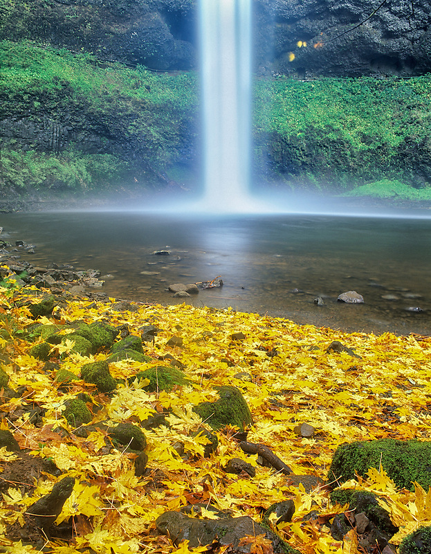 South Falls with fall colored Big Leaf Maple leaves. Silver Falls State Park. Oregon.