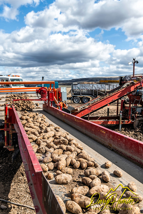 Sorting and shipping potatoes in Eastern Idaho.