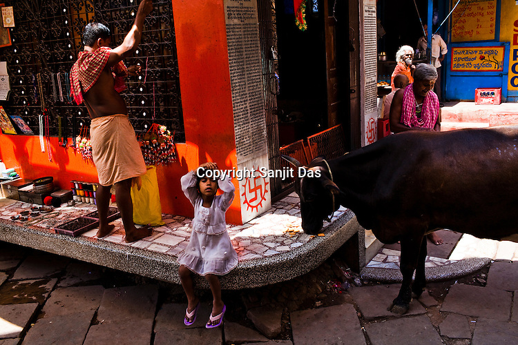 A cow eats the biscuits while a young girl looks on outside a temple at the ancient city of Varanasi in Uttar Pradesh, India. Photograph: Sanjit Das/Panos