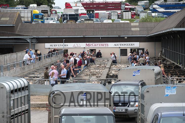 Worcester livestock market <br /> Picture Tim Scrivener 07850 303986<br /> &hellip;.covering agriculture in the UK&hellip;.
