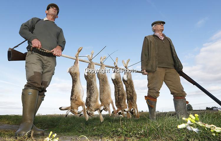 Foto: VidiPhoto<br /> <br /> HAZERSWOUDE – Jagers schieten maandag hun eerste haasjes van het nieuwe jachtseizoen in een akkerbouwgebied bij Hazerswoude. Het jachtseizoen voor hazen en fazanten is vanaf vorige week weer geopend. Mede dankzij het droge weer vanaf het voorjaar zijn er dit jaar extreem veel hazen. Dat betekent dat er tijdens Kerst niet alleen vaker een Hollandse hazenbout op het menu zal staan, maar ook dat akkerbouwers en boomkwekers meer vraatschade hebben. Jagers moeten dus dit najaar wat vaker op pad om de hazenpopulatie binnen de perken te houden. Hazen zijn dol op suikerbieten, uien, spruiten en andere koolsoorten.