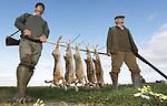 Foto: VidiPhoto<br /> <br /> HAZERSWOUDE &ndash; Jagers schieten maandag hun eerste haasjes van het nieuwe jachtseizoen in een akkerbouwgebied bij Hazerswoude. Het jachtseizoen voor hazen en fazanten is vanaf vorige week weer geopend. Mede dankzij het droge weer vanaf het voorjaar zijn er dit jaar extreem veel hazen. Dat betekent dat er tijdens Kerst niet alleen vaker een Hollandse hazenbout op het menu zal staan, maar ook dat akkerbouwers en boomkwekers meer vraatschade hebben. Jagers moeten dus dit najaar wat vaker op pad om de hazenpopulatie binnen de perken te houden. Hazen zijn dol op suikerbieten, uien, spruiten en andere koolsoorten.