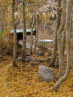 A carpet of leaves surrounds boat storage shelters.