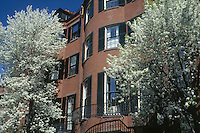 House with pear trees, Beacon Hill, Boston, MA