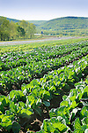 Field of vegetables and farm. Nippenose Valley.