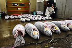 "An employee at the world's biggest fish market in Tsukiji, Tokyo reads the morning paper prior to auctioning at the market. More than 2,300 tons of fish -- about one-third of the total consumed in Japan -- passes through Tsukiji each day and the market offers more than 450 varieties of marine products. The market, which dates back almost 75 years, is slated to move to a high-tech site on a man-made island in Toyosu, which is well-documented as being contaminated with benizine. Not that Tsukiji is much better off -- many buildings in the aging site are stuffed with asbestos. ""Choose your poison,"" says one Tsukiji official. The new site, which the government plans to be readied by 2012, will be significantly larger, with more room for off-loading and for sellers to display their goods. The current location, says one official, is too cramped and collisions between motorised carts and pedestrians means accidents occur almost daily. Meanwhile, with fish sales down, it is becoming more difficult to justify Tsukiji's prime location and property developers are keeping a close watch on Tsukiji land, which is just a few blocks from the ritzy Ginza district of Tokyo, where per-meter land prices are among the highest in the world...The move to the new Toyosu location, meanwhile, has been at the center of heated debate -- clean-up operations alone are estimated to cost ¬?67 billion (around US$660 million), with a further ¬?450 billion to build a new marketplace. Big wholesalers favour the move, but the 1,600-plus merchants mostly are against it. Yoshiharu Kikuraku, a Tsukiji storeowner who began working at the market 60 years ago, expresses bewilderment at the plans, saying that the name Tsukiji itself has become synonymous with the world's best and most eclectic selection of fish. ""This place has a long tradition. Why break it and start from scratch all over again?"" he says."