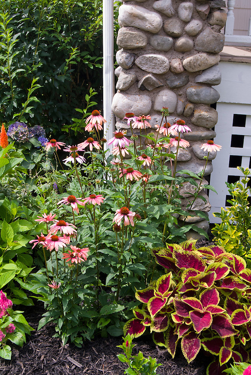 Perennials And Annual Plants Growing Together Echinacea Coleus