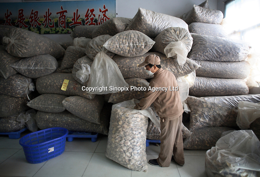A worker bags dried Shitaki mushrooms  at the Sanyo Food Co. in Sanligang Township, Suizhou City, China.