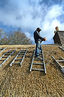 BNPS.co.uk (01202 558833)<br /> Pic: ZacharyCulpin/BNPS<br /> <br /> Pictured: Master thatcher Scott Symonds puts the finishing touches to the new straw roof at the former home of Victorian author Thomas Hardy.<br /> <br /> The National Trust, which owns the picturesque cottage near Dorchester, Dorset, has closed the historic property for more than a month while it undergoes vital conservation work.<br /> <br /> On the inside new structural supports have been installed and the stone floor repointed after taking a battering from thousands of visitors over the years.<br /> <br /> And on the outside the roof has been re-thatched by Scott and his dad Dave who even appeared was an extra in the 2015 film adaptation of Hardy's Far From the Madding Crowd.