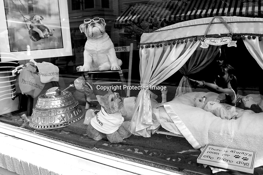 A display of dogs in a Provincetown store shows the town's attitude towards their canine guests.  Provincetown was recently voted most dog-friendly town in the U.S.A.  by Dog Fancy Magazine. 8/6/10 Julia Cumes