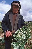 Europe/France/Bretagne/29/Finistère/Env. de Guisseny: M Jean BOUDAUT, récolteur de choux fleurs [Non destiné à un usage publicitaire - Not intended for an advertising use]