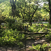 NEW YORK, USA - MAY 27: Three people get injured after a branch falls on them in Riverside Community Park in Upper West Side Manhattan on May 27,2020 in New York, USA. (Photo by Joana Toro/VIEWpress )