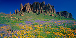 Tonto National Forest, AZ<br /> Field of Mexican Poppies and Coulter's Lupine under spires of the Superstition Mountains, Superstition Wilderness