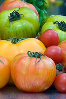 Copia striped mottled heirloom orange tomato with other varieties of antique vegetable tomatoes