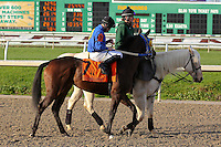 """January 17, 2015: Queen""""s Ready (KY) with Sal Gonzalez Jr. in the Silverbulletday Stakes at the New Orleans Fairgrounds course. Steve Dalmado/ESW/CSM"""