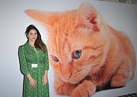 AUG 08 The Cats Protection's National Cat Awards 2019, London, UK
