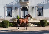 Veiga Lusitano stallion Libre da Broa posing at the Quinta da Broa
