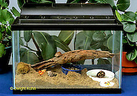 1Y48-008a  Land Hermit Crabs and Aquarium Habitat with food and water.