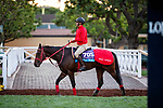 OCT 27: Breeders' Cup Juvenile Turf Sprint entrant Full Flat, trained by Hideyuki Mori, at Santa Anita Park in Arcadia, California on Oct 27, 2019. Evers/Eclipse Sportswire/Breeders' Cup