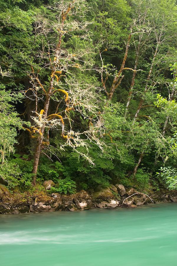 Skagit River, Newhalem, Ross Lake National Recreation Area, Whatcom County, Washington, USA