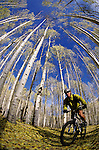 A mountain biker rides down a leaf covered trail in the La Sal Mountains near Moab, Utah.