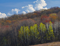 Early tree buds show a variety of colors in spring iin the Baraboo Hills in Sauk County, Wisconsin