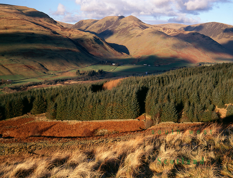 Looking across Moffat Dale to the twin peaks of Saddle Yoke in the Moffat Hills Scotland UK