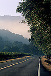 Vineyards, fog, and road in the McDowell Valley, near Hopland, Mendocino County, California