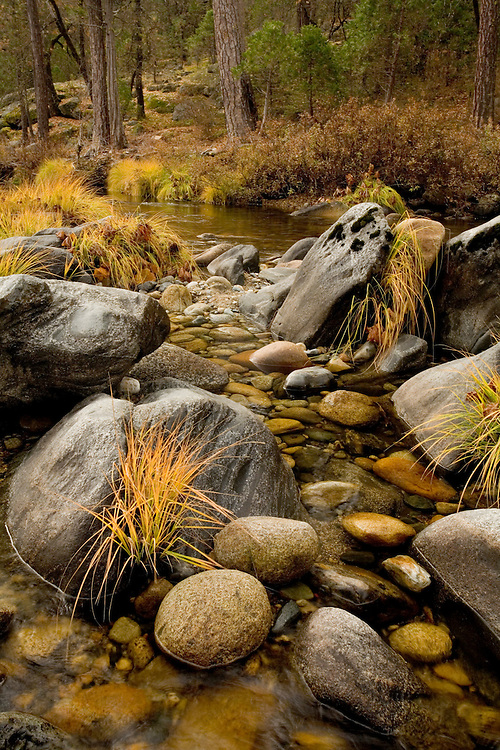 In autumn the South Fork of Merced River flows quietly through the Wawona Area of Yosemite NP