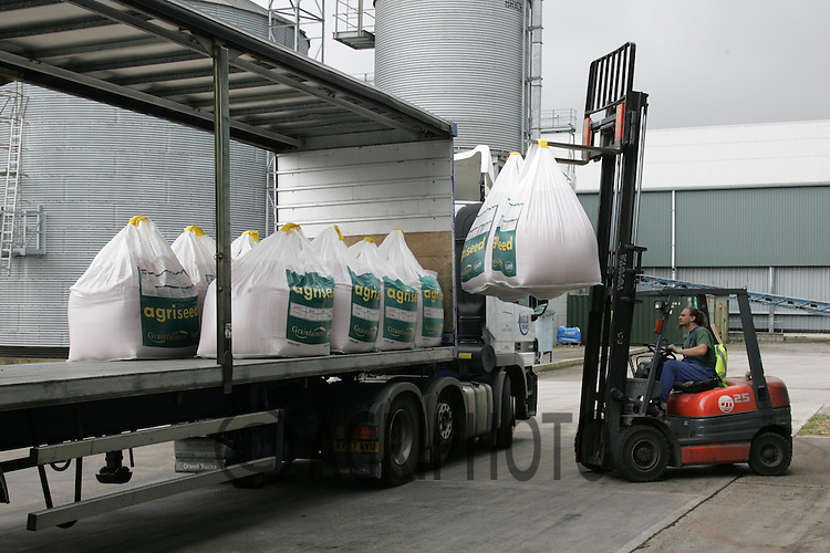 Wheat seed being loaded on a lorry from a seed treatment plant