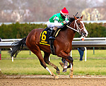 DECEMBER 01, 2018 :Maximus Mischief, ridden by Frankie  Pennington, wins the Remsen at Aqueduct Racetrack on December 01, 2018 in Ozone Park, NY. Dan Hearyi/ESW/CSM