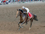 Yoshida (no. 1), ridden by  Joel Rosario, and trained by William Mott, wins the Woodward Stakes (Grade 1), Sep. 1, 2018 at the Saratoga Race Course, Saratoga Springs, NY.   (Bruce Dudek/Eclipse Sportswire)